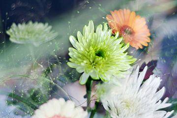 Najaarse bloemen / Astras van Marianna Pobedimova