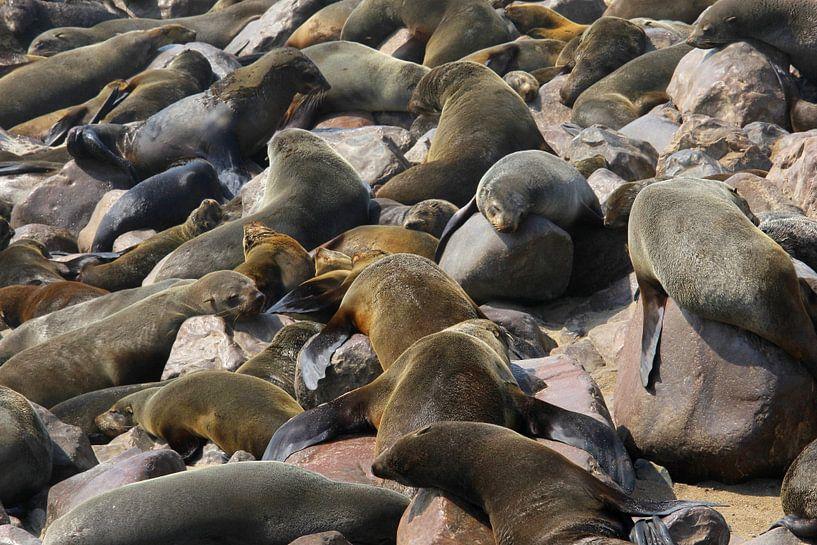 Zeehonden zonnebaden Skeleton Coast Namibie van Inge Hogenbijl