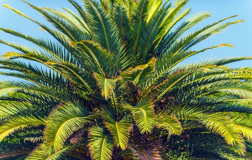 Palmboom van Brian Morgan