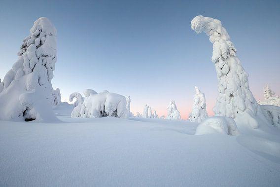 Winterwonderland van Menno Schaefer