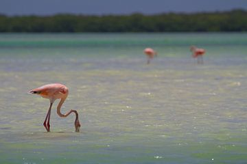 Flamingos von Jeroen Meeuwsen