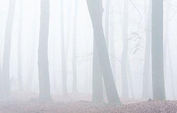 Nebliger Buchenwald von Danny Slijfer Natuurfotografie