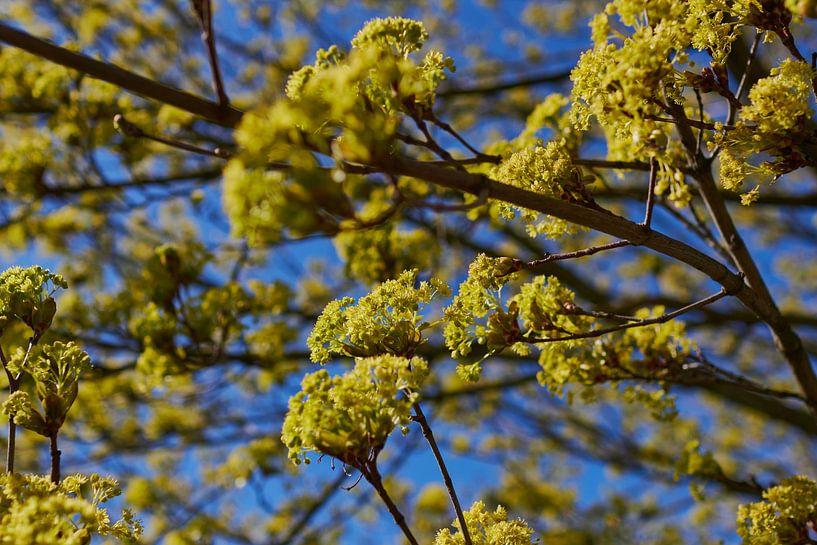 Chaux fleurie sur Klaus Feurich Photography