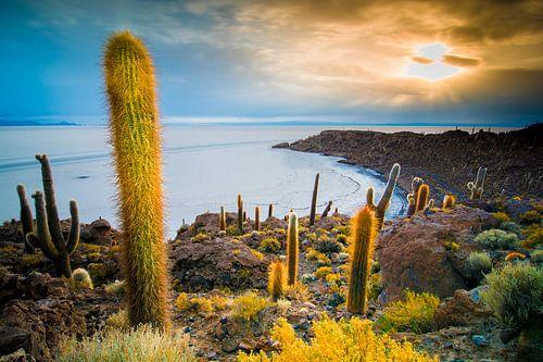 Inca Wasi, cactus island von Jelmer Jeuring