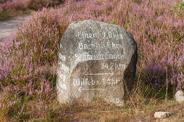 Heidelandschap met steen als wegwijzer, Wilseder Berg, wilsede, Natuurpark Lüneburger Heide, Nedersa van Torsten Krüger