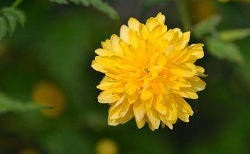 gele bloem van Petra De Jonge