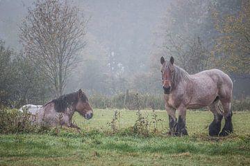 Trekpaarden von Bruno Hermans