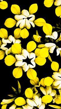 Fleurs jaunes sur Stijn Cleynhens