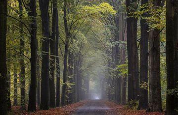 Boslaan boswachterij Giten von Jurjen Veerman