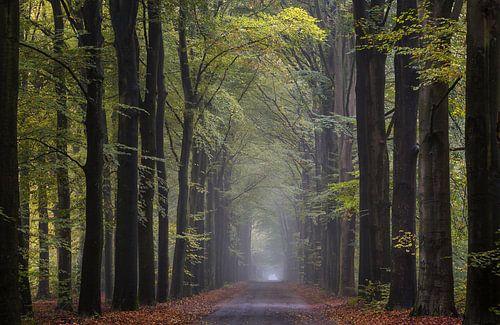 Boslaan boswachterij Giten van Jurjen Veerman