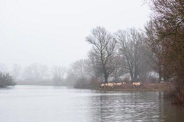 Konik paarden langs het water van Tania Perneel