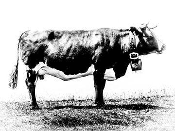 profiel van een koe in zwart wit van BJ Fleers