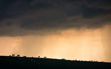 Onweer - Waarde van Maurice Weststrate