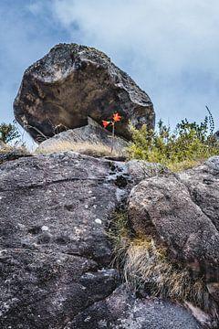 Rode berg bloem in Parque Nacional da Serra dos Orgãos von Nick Chesnaye