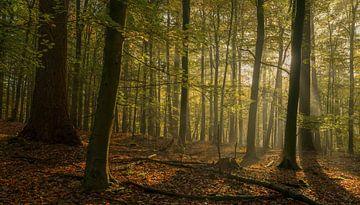 De dromende bomen van Joris Pannemans - Loris Photography