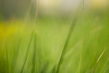 Vaag gras van Maarten Borsje