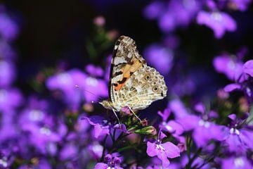 Distelvlinder op paarse bloemen van Shirley Douwstra