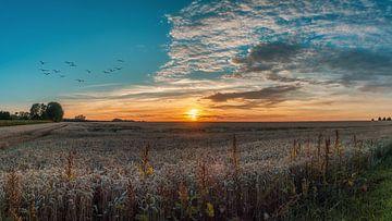 Coucher de soleil sur le champ de maïs sur Steffen Peters