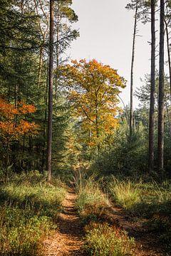Waldweg im Herbst von Mayra Pama-Luiten