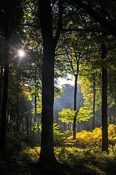 Sonneinstrahlung - Buchenwald Nationalpark Jasmund von GH Foto & Artdesign