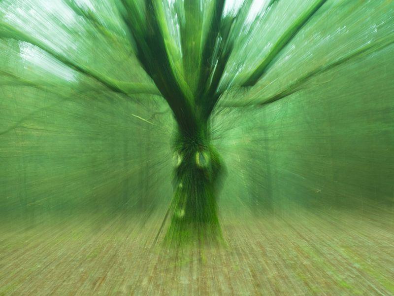 Levende boom van Wendy Drent