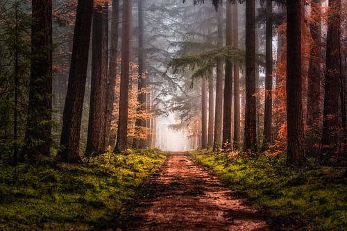 Laan door het bos van