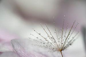 Druppels op bloem van