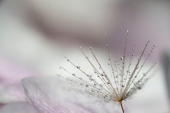Druppels op bloem van Piet Haaksma