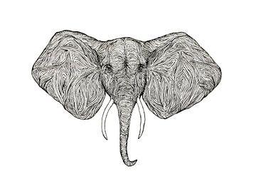 Illustratie Olifant van Marijn Broeks