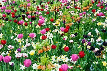 tulpen en andere bloemen in het veld von