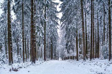Winterwaldweg nr. 1 van Uwe Ulrich Grün