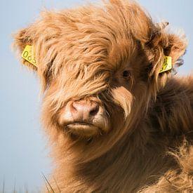 Le Highlander écossais regarde droit dans la caméra sur Mascha Looije