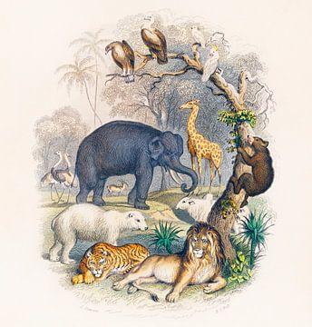 Eine Geschichte der Erde und der belebten Natur, Oliver Goldsmith von