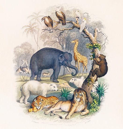 Eine Geschichte der Erde und der belebten Natur, Oliver Goldsmith