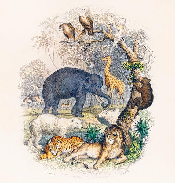 Een geschiedenis van de aarde en de geanimeerde natuur, Oliver Goldsmith van Meesterlijcke Meesters