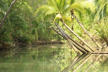 Mangrove Damas Island Costa Rica von