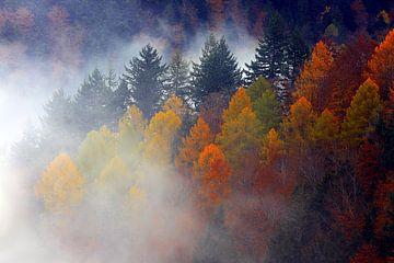 Zwarte Woud in de herfst van Patrick Lohmüller