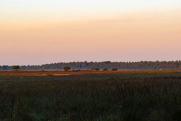 oranje lucht op de hei van Tania Perneel