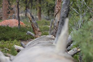 Eekhoorn op omgevallen boom