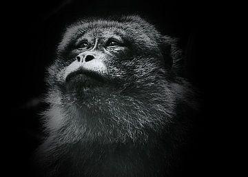 Berberaffe . von Yvonne Stroomberg