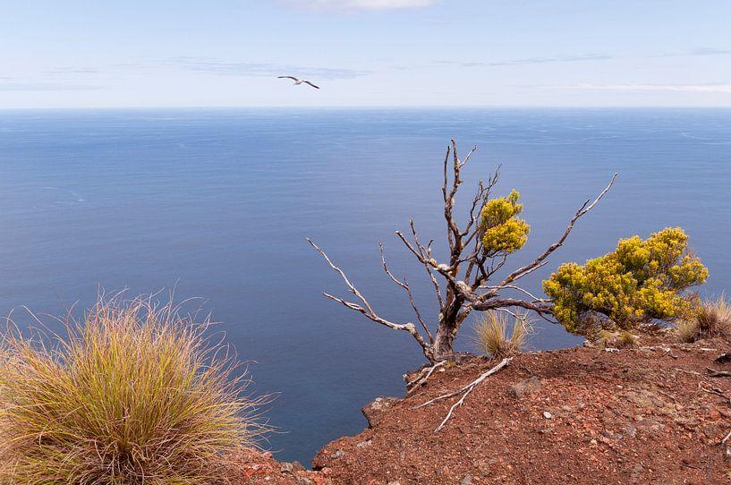 Acores Islands - 1 van Damien Franscoise