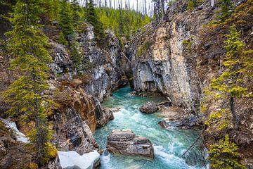 Marble canyon, Kootenay National Park, Canada van Rietje Bulthuis