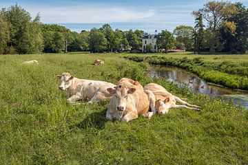 Wiederkäuende Kühe in einer niederländischen Landschaft von Ruud Morijn