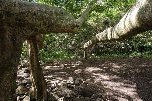 Bodhiboom Hawaii
