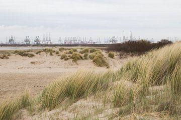 Uitzicht op de 2e Maasvlakte vanaf strand Oostvoorne