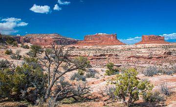 Schöne Sicht auf die Tafelberge im Canyonlands National Park, Utah von Rietje Bulthuis