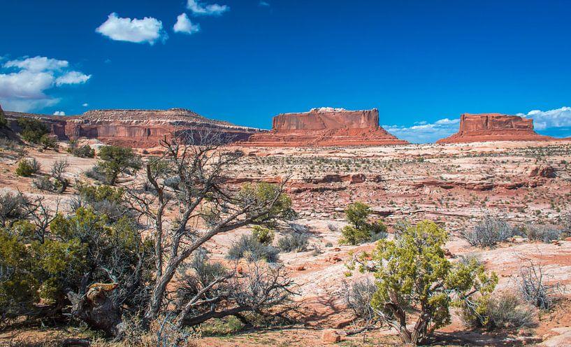 Mooi zicht op deTafelbergen in Canyonlands NP, Utah van Rietje Bulthuis