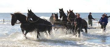 Paardenreddingsboot von Rinnie Wijnstra