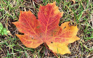 Kleurrijke herfstbladeren op de grond van MPfoto71