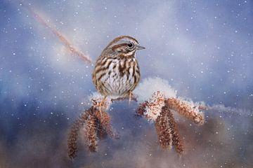 Spatz auf Schneekatzenstock und Schnee in schönen blauen und braunen Farben von Diana van Tankeren